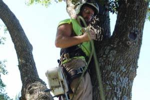 Jeff Hoheisel Professional Tree Care