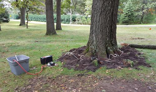 Pioneer Tree Service